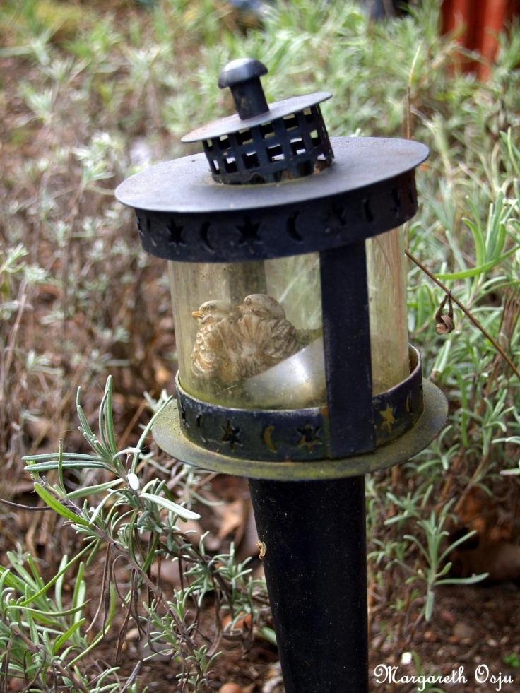 Morgonröd - fågelpar mini